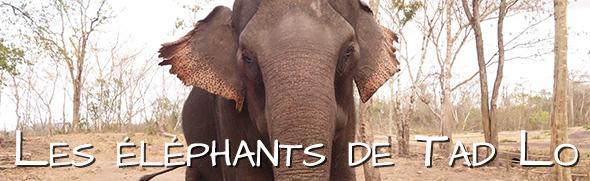 Les éléphants de Tad Lo
